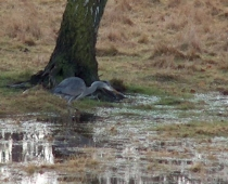 Animals of Westfield Common